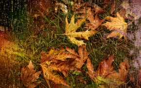 Картинка капли, дождь, осенние листья, Kide Fotoart