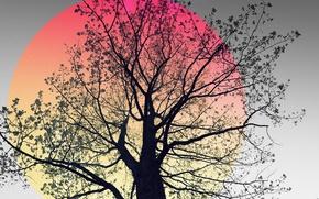 Обои природа, фон, дерево