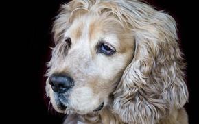Картинка друг, собака, мордочка