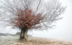 Картинка иней, туман, дерево