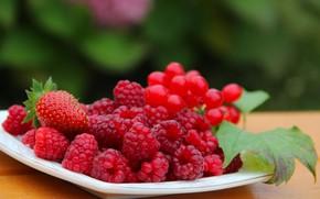 Картинка осень, ягоды, малина, красота, урожай, клубника, витамины, вкусно, дача, калина