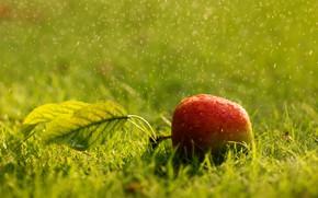 Картинка лето, трава, яблоко