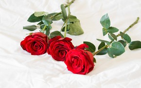 Картинка розы, трио, красные розы, три розы