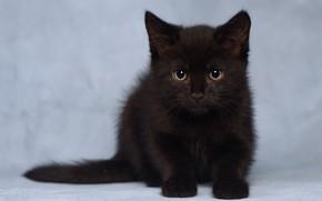 Картинка взгляд, котенок, фон, малыш, чёрный котёнок