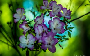 Картинка цветы, фон, сиреневые