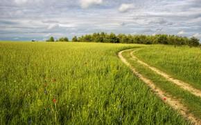 Обои поле, дорога, лето