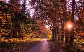 Обои листья, лес, осень, деревья, дорога, солнце