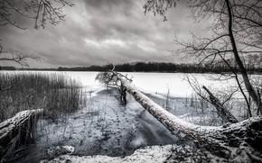 Картинка зима, снег, озеро, дерево