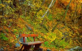 Картинка Осень, Скамейка, Fall, Autumn, Colors