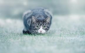 Картинка трава, глаза, лужайка, котейка