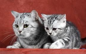 Картинка кошка, семья, котёнок
