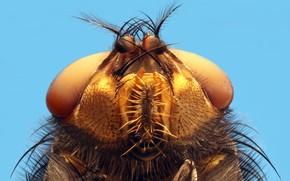 Картинка макро, чужой, насекомое