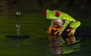 Картинка вода, капли, макро, природа, темный фон, лягушка, зеленая, водоем, фауна, древолаз