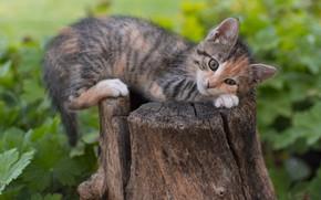 Картинка котенок, пень, милый