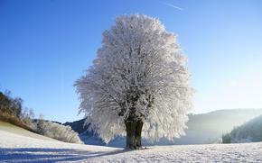 Картинка зима, иней, небо, солнце, снег, дерево, поляна