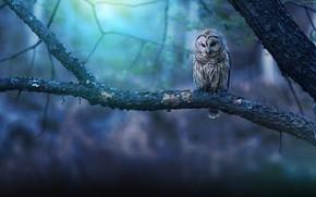Картинка фон, дерево, сова, ветка