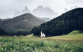Картинка лес, лето, цветы, горы, весна, Альпы, церковь, одуванчики, луга