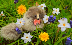 Картинка Цветы, Весна, Цветочки, Flowers, Spring, Colors