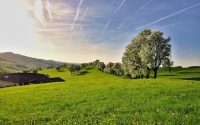 Картинка деревья, поляна, Природа, травка, голубое небо
