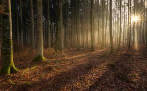 Картинка лес, свет, деревья, magic forest