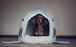 Обои дом, домик, собака