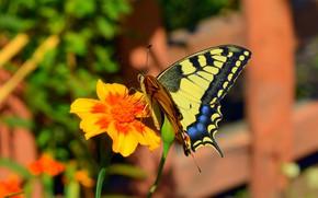 Картинка Макро, Бабочка, Цветок, Flower, Боке, Macro, Butterfly