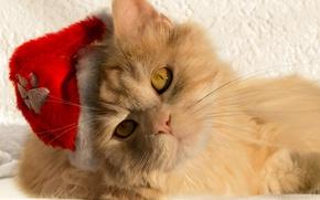 Обои кошка, кот, взгляд, мордочка, Санта, колпак, рыжий кот