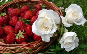 Картинка зелень, лето, трава, цветы, природа, ягоды, роза, еда, розы, клубника, белые, корзинка, бутоны, лукошко, композиция