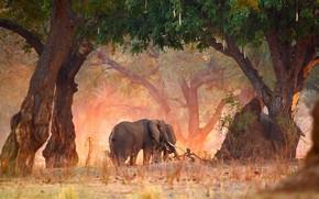 Картинка деревья, природа, Африка, Зимбабве, Мана-Пулс, саванный слон