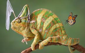 Обои хамелеон, юмор, бабочка, фотошоп, сачок, ситуация, фон, креатив, ветка