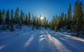 Обои лучи, небо, снег, зима, солнце, деревья, лес