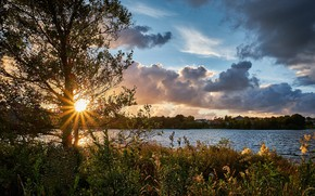 Картинка солнце, природа, дерево