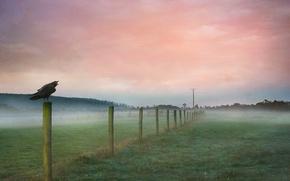 Картинка поле, птица, забор, ворон