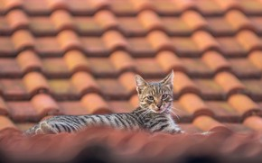 Картинка крыша, взгляд, котейка