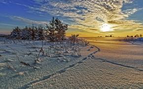 Картинка лес, снег, деревья, сугробы