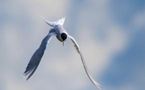 Картинка небо, птица, полёт