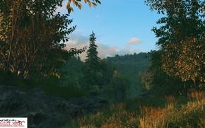 Картинка лес, озеро, берег, evening, hidden lake
