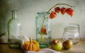Картинка яблоки, тыква, бутылки, натюрморт, физалис