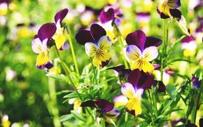 Картинка лето, макро, цветы, паутина, фиалка