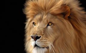 Картинка морда, фон, лев, Big, cats, Lions