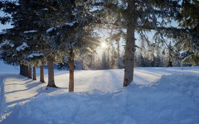 Картинка зима, дорога, лес, снег, деревья, фото