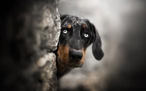 Обои друг, взгляд, собака