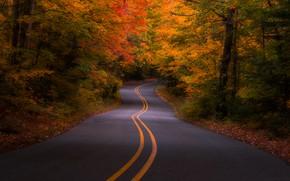 Обои США, лес, осень, деревья, дорога, Michigan
