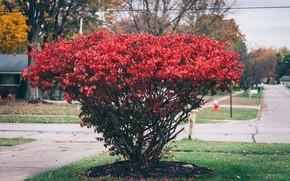 Картинка дерево, куст, красные лепестки