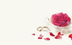 Картинка праздник, роза, свадьба, лепестки розы, обручальные кольца