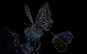 Картинка огни, бабочка, силуэт, мотылек