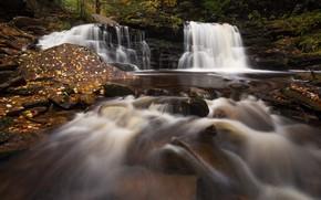 Картинка Природа, Поток, Водопад, Лес, Листья