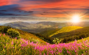 Картинка лес, небо, трава, солнце, облака, лучи, деревья, цветы, горы, луг, панорама