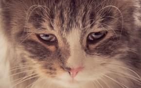 Картинка кошка, глаза, кот, усы, свет, печаль, взгляд вниз