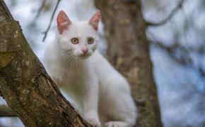 Картинка белый, дерево, котик